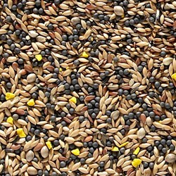 Johnston & Jeff Mixed Canary Seed 20Kg